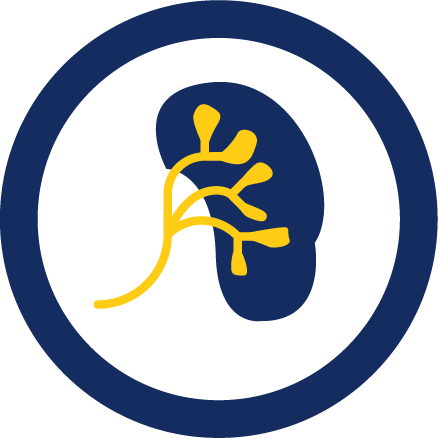 Malformation kidney